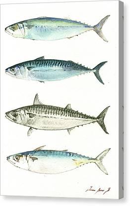 Mackerel Fishes Canvas Print