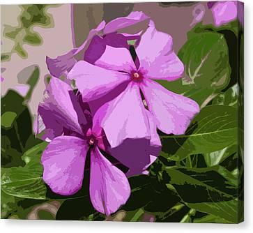Madagascar Rosy Periwinkle Canvas Print by Allan  Hughes