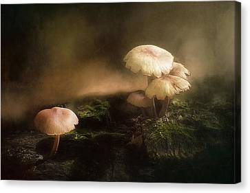 Depth Of Field Canvas Print - Magic Mushrooms by Scott Norris