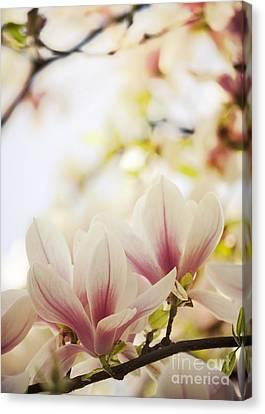 Magnolia Canvas Print by Jelena Jovanovic