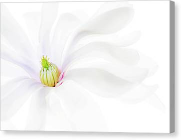 Canvas Print featuring the photograph Magnolia by Rebecca Cozart