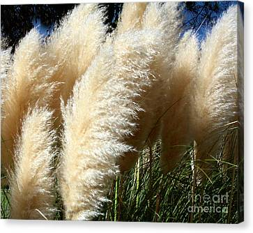 Canvas Print featuring the photograph Majestic Pampas Grass by Merton Allen