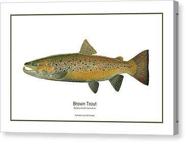 Male Brown Trout Canvas Print