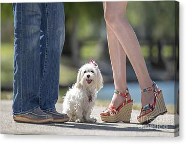 Maltese In The Middle Canvas Print by Andrea Auletta