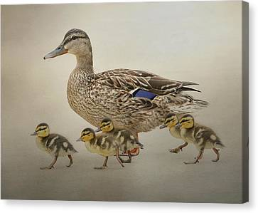 March Of The Ducklings Canvas Print by Fraida Gutovich