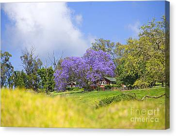 Maui Upcountry Canvas Print by Ron Dahlquist - Printscapes
