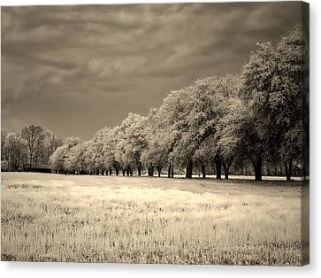 Surreal Infrared Sepia Nature Canvas Print - Meadow In Infrared by L O C