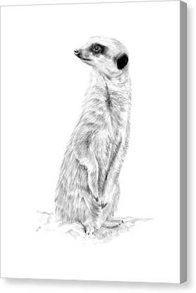 Meerkat In Charge Canvas Print by Elizabeth Lock