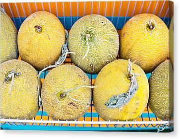 Cantaloupe Canvas Print - Melons by Tom Gowanlock