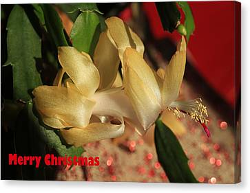 Christmas Cactus Canvas Print - Merry Christmas by Donna Kennedy