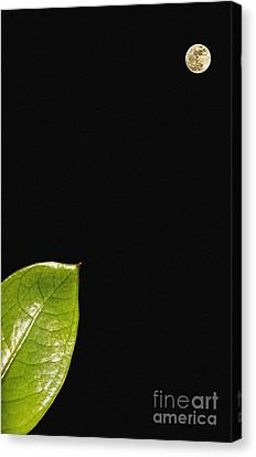 Micro And Macro Canvas Print by Celestial Images