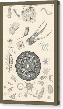 Microscopic Objects Canvas Print