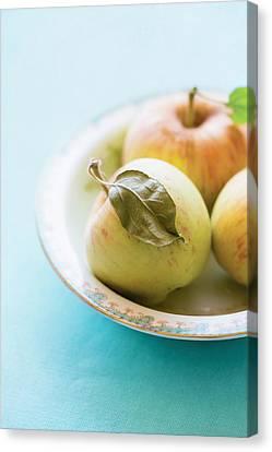 Mini Apples Canvas Print