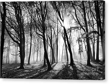 Mist And Shadow Canvas Print