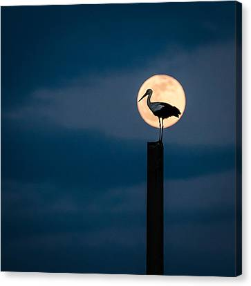 Moon Stork Canvas Print by Catalin Pomeanu