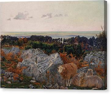 Morecambe Bay From Warton Crag Canvas Print by Daniel Alexander Williamson