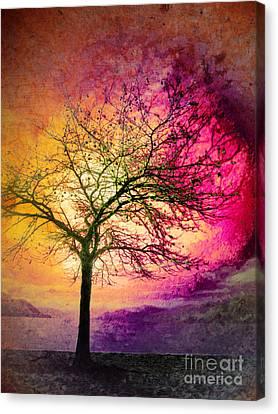 Morning Fire Canvas Print by Tara Turner