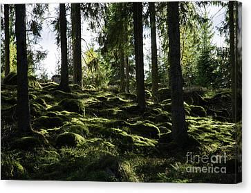 Canvas Print featuring the photograph Mossy Rocks by Kennerth and Birgitta Kullman