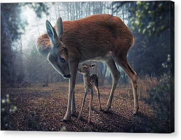 Fawn Canvas Print - Mother And Fawn by John Wilhelm