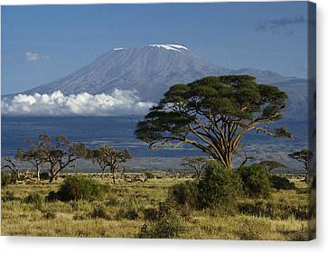 Mount Rushmore Canvas Print - Mount Kilimanjaro by Michele Burgess
