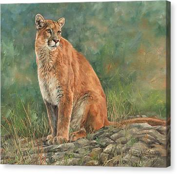 North American Wildlife Canvas Print - Mountain Lion by David Stribbling