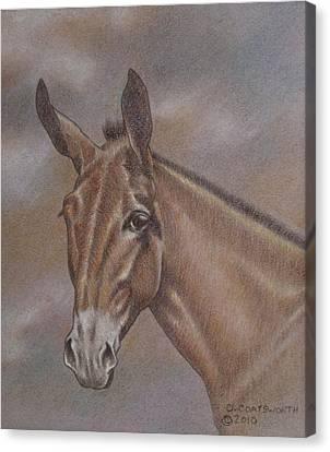 Mule Head Canvas Print