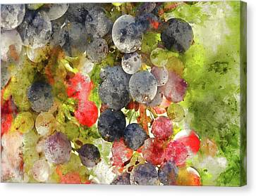 Winery Canvas Print - Multi Color Grapes On The Vine by Brandon Bourdages