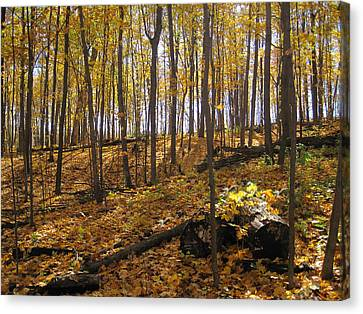 Music Of The Fall Canvas Print by Leon Zernitsky