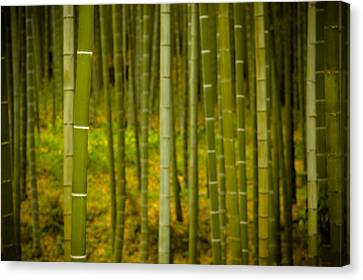 Mystical Bamboo Canvas Print