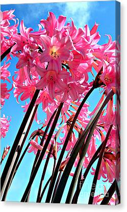 Naked Ladies Canvas Print