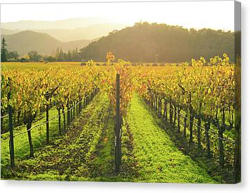 Napa Valley California Vineyard In The Fall Canvas Print
