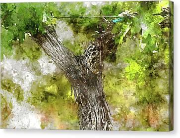 Napa Valley Grape Vine Closeup In Spring Canvas Print by Brandon Bourdages