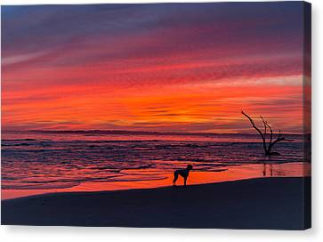 Nature Canvas Print by RC Pics