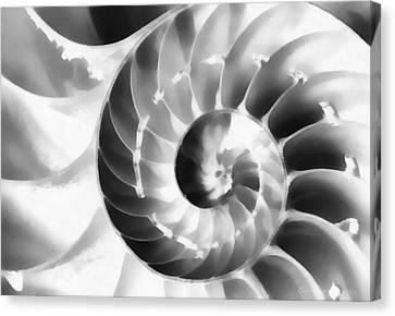 Nautilus Canvas Print by Clare VanderVeen