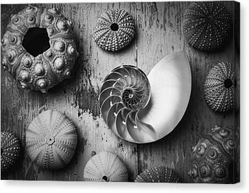 Nautilus Shell In Black And White Canvas Print