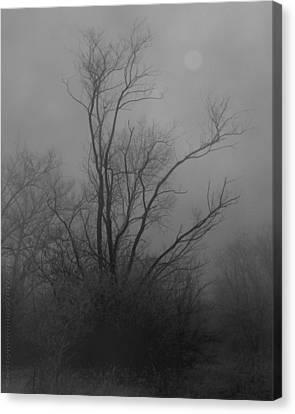 Nebelbild 13 - Fog Image 13 Canvas Print by Mimulux patricia no No
