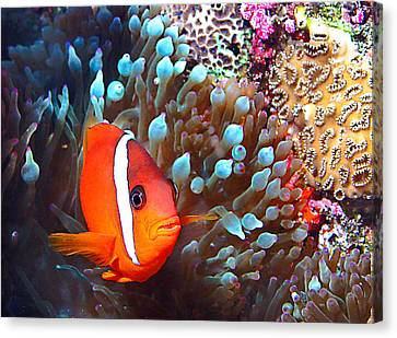 Nemo Canvas Print by Jean Noren