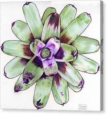 Neoregelia 'painted Delight' Canvas Print by Penrith Goff