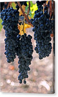 Canvas Print featuring the photograph New Grapes by Gary Brandes