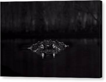 Night Hunter Canvas Print by Mark Andrew Thomas