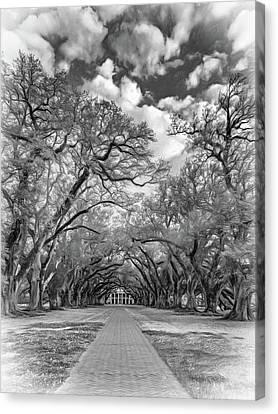 Oak Alley 7  Canvas Print