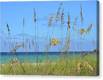 Ocean Blue Canvas Print by Tamra Lockard