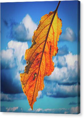 October Leaf B Fine Art Canvas Print