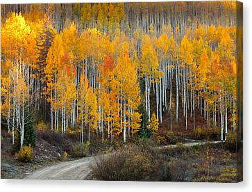 Off The Beaten Path Canvas Print by Tim Reaves