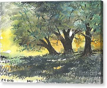 Old Oaks Canvas Print by Patrick Grills