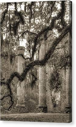 Old Sheldon Church Ruins Canvas Print by Dustin K Ryan
