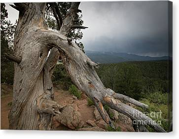 Old Tree On The Mountain Canvas Print