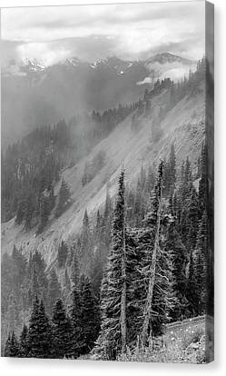 Olympic Range From Hurricane Ridge Canvas Print by Peter J Sucy