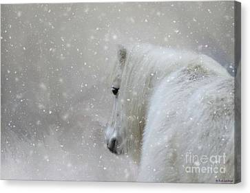 On A Cold Winter Day Canvas Print