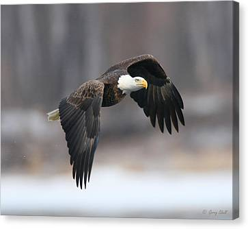 On The Hunt Canvas Print by Gerry Sibell